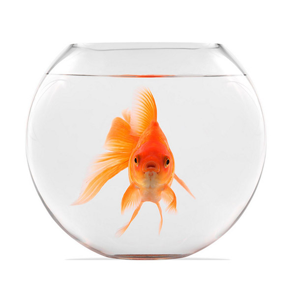 A fish will never outgrow its environment. The same is true for you.
